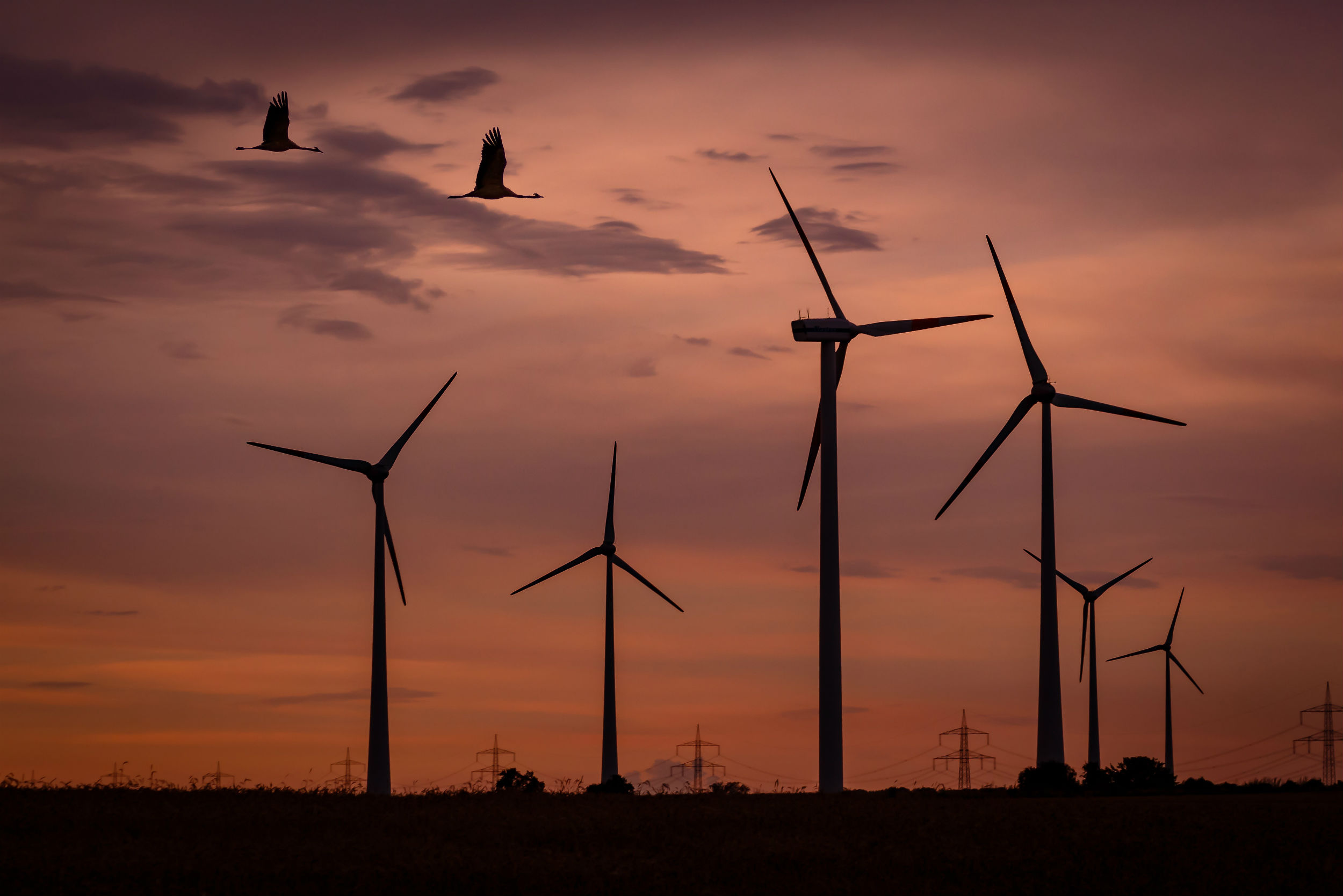 New technology can save birds from turbine blades