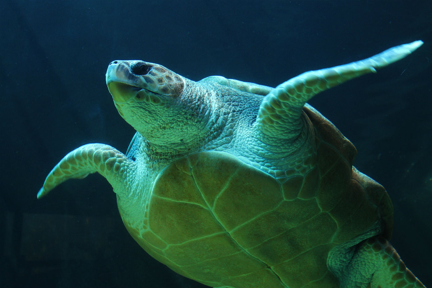 Environmental warming results in 99% female turtles in Australia