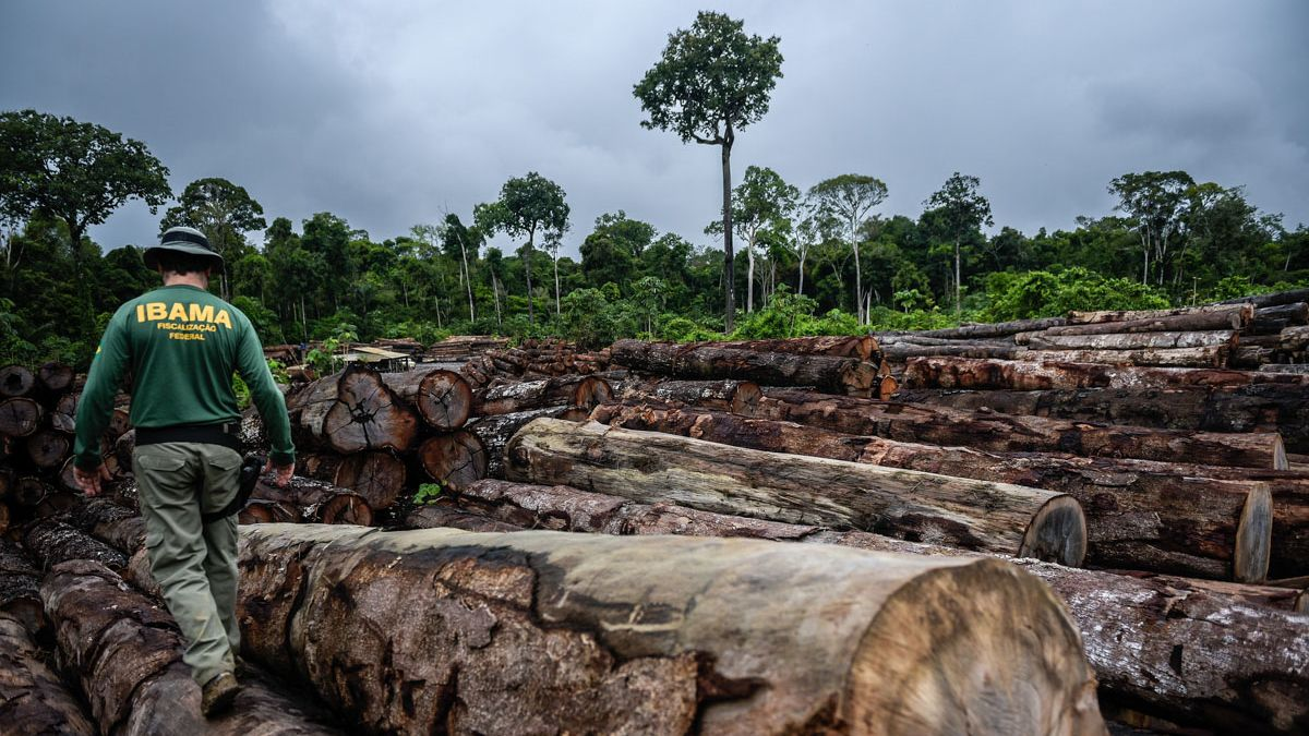 In this century, the Amazon lost the territorial equivalent to Ecuador