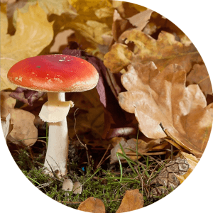 Do you know a fungus that serves as a sustainable packaging?